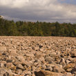 Boulder field in Hickory Run State Park.