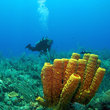 All Other Destinations and Attractions in Cayman Islands