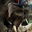 Elephant and rider in Chaing Mai.
