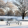 Fresh snowfall in a Chicago Park.