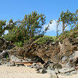 Coastal rocks and trees at D.T. Fleming Beach Park.