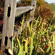 Country fence and garden on farm in Midwestern Illinois.