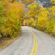 Country road with yellow Aspen trees in Wyoming.