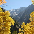 Fall foliage in Wasatch Mountains, Utah.