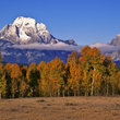 Fall landscape with Mount Moran as the backdrop.