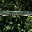 Foot bridge across green foliage in Hawaii.