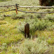 Gravesite of unknown pioneer near Bonanza, Idaho.