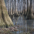 Hopkins - Congaree Swamp National Monument