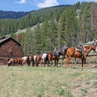 Horses ready to go on Montana ranch.