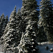 Idaho forest in Winter.
