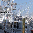 Fishing boats in the harbor at Key West.