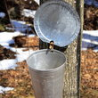 Maple Sap Bucket, Baldwin, Maine.