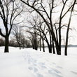 Snow covered trail Minneapolis park.