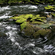 Moss covered rocks in Cedar Creek, Washington.