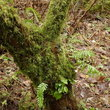 Moss covered tree in Munson Creek Falls State Site.