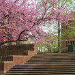Steps to Fisk University in Nashville, Tennessee.