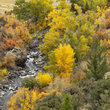 Overlooking a rocky stream surrounded by Fall colors in Wyoming.