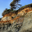 Painted cliff and surf pine at the Pacific Ocean.