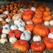 Pumpkins at a Roadside Stand in New York.