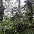 Rainforest of Ecuador.