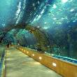 Underwater tunnel at the L'Oceanographic Center in Valencia.