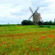 Windmill and poppies in Brittany.