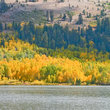 Yellow Fall foliage on Marlette Lake, Nevada.