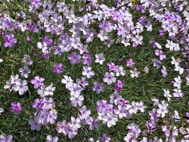 El jardín de flores alpino