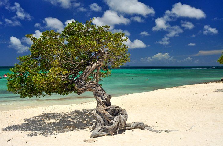 10 Best Beaches In Aruba Planetware