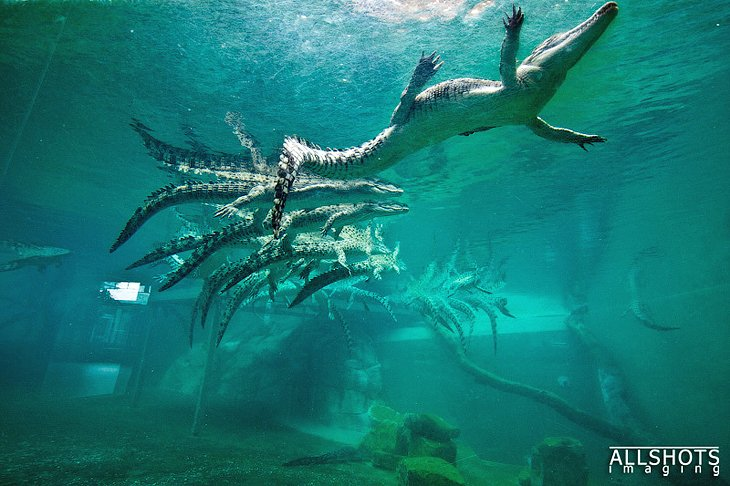 14 Top-Rated Tourist Attractions in Darwin | PlanetWare