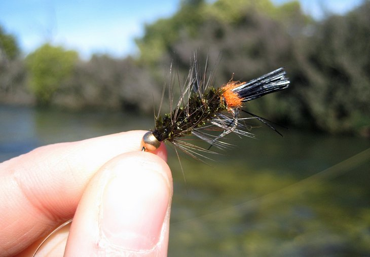 Woolly Bugger, a great Tasmanian trout fly