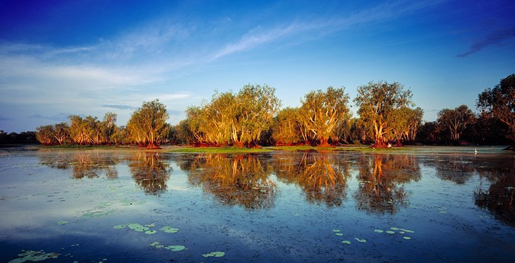 Yellow Water Billabong, Kakadu National Park