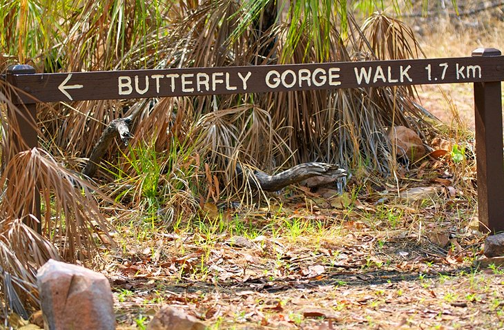 Butterfly Gorge Walk