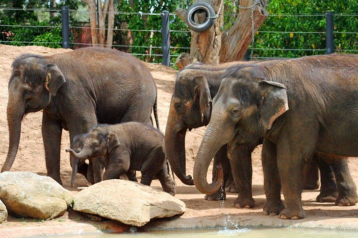 باغ وحش ملبورن
