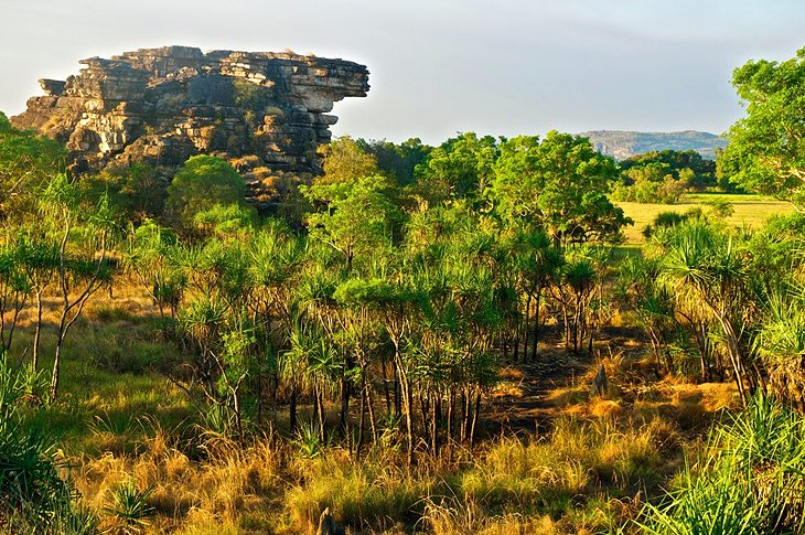 Visiting Kakadu National Park From Darwin Attractions Tips - 11 things to see and do in kakadu national park