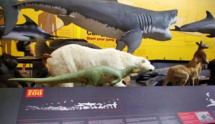 کشف اسکلت دایناسورها در موزه کوئینزلند