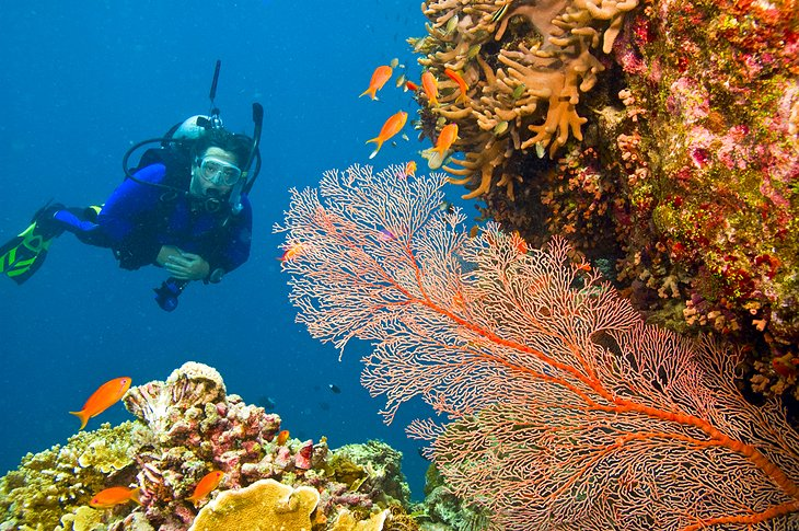 Diver admiring a gorgonian sea fan