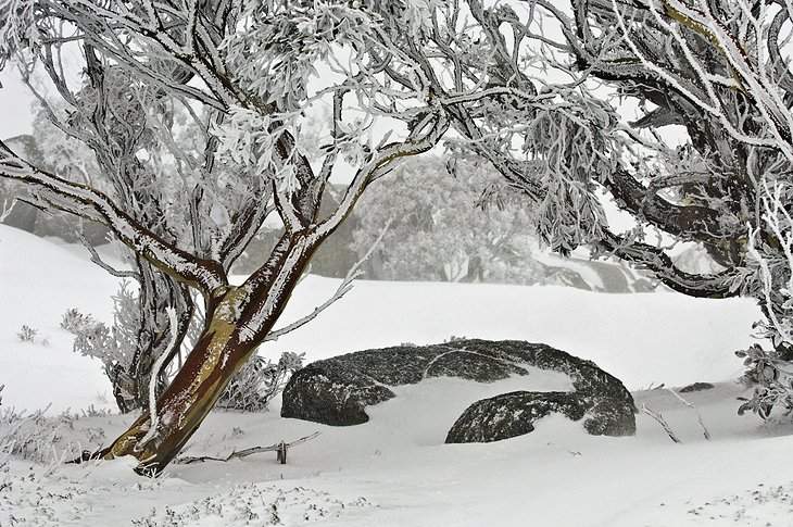 exploring the top attractions of the snowy mountains nsw planetware
