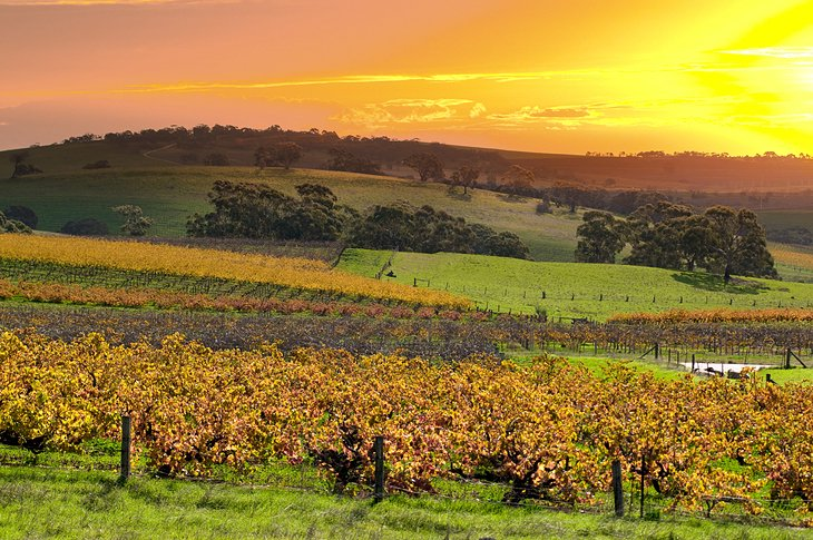 Top Rated Tourist Attractions In The Barossa Valley