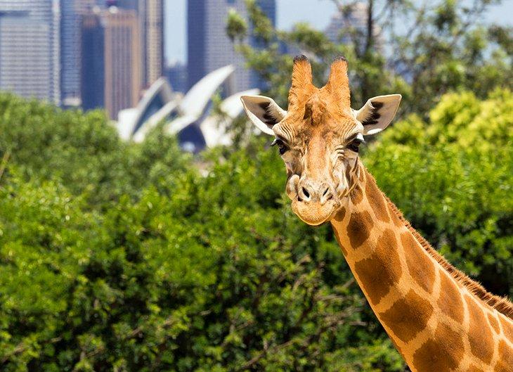 باغ وحش Taronga