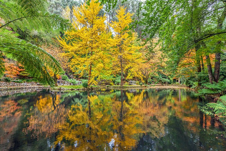 Fall Color in the Dandenong Ranges