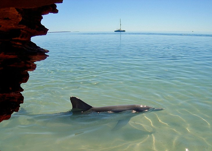 Shark Bay and Monkey Mia
