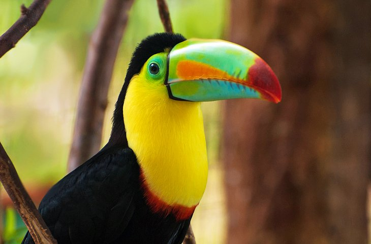 12 TopRated Tourist Attractions in Belize PlanetWare