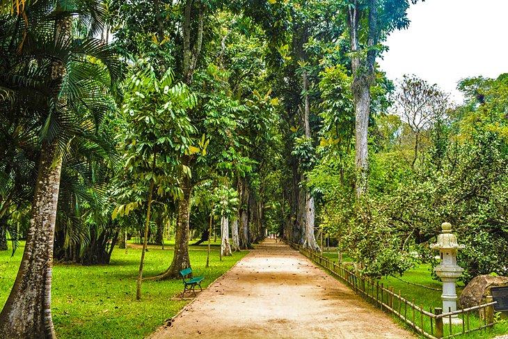 حديقة النباتات من المزارات السياحية في مدينة ريو دي جانيرو البرازيلية