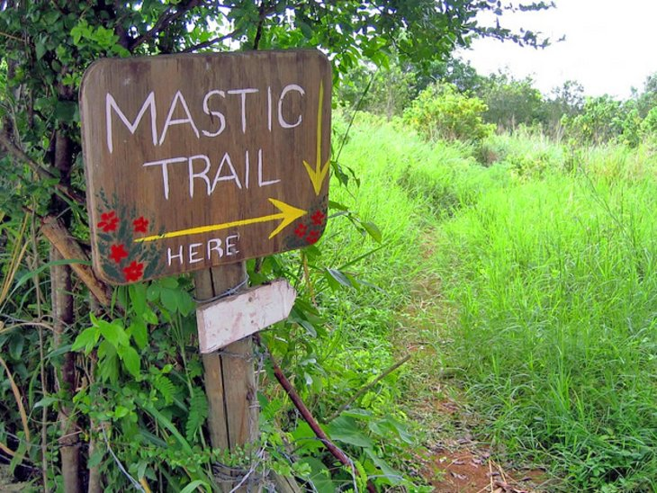 Mastic Reserve and Trail