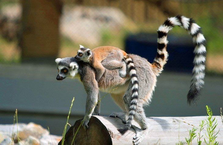 Зоопарк Эдмонтонской долины