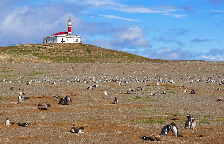 بنای یادبود طبیعی لس Pingüinos