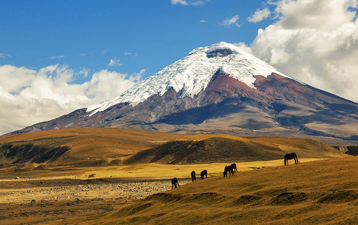 Cotopaxi and Cajas National Parks