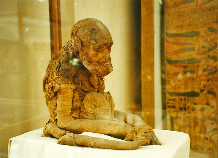 Mummified Monkey at the Egyptian Museum