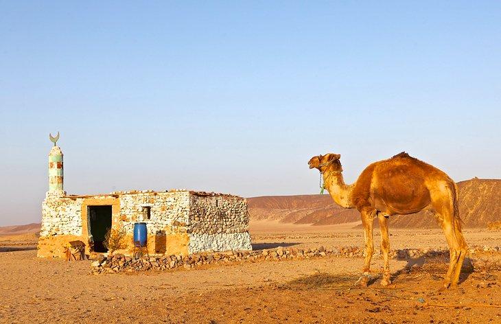 Bedouin Dinner Tours